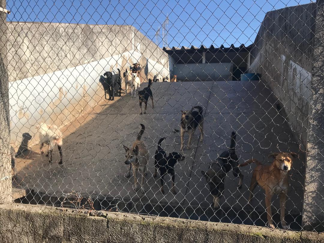 Processo visa a primeira formação do Conselho Municipal de Proteção, Defesa e Valorização da Vida Animal