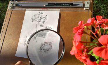 Exposição 'Floradas Urbanas' reúne aquarelas e ilustrações botânicas  no Museu