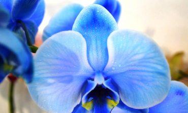 Exposição Nacional de Orquídeas começa sexta