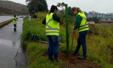 Prefeitura realizou plantio de 6 mil mudas de árvores em 21 meses