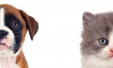 Procon realiza pesquisa de preços de produtos e serviços PET