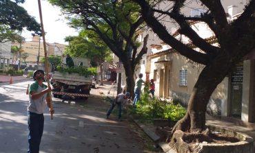 Têm início a poda e replantio de árvores na área central