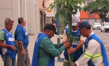 Tem início pela rua Alagoas o projeto de arborização da área central