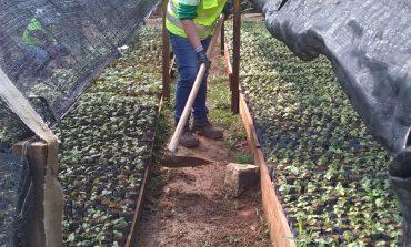 Prefeitura vai distribuir mudas frutíferas neste sábado Dia da Árvore