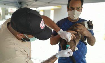 Vacinação Antirrábica   Drive Thru acontece no Estádio Ronaldão nesta sexta (24)